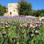 8 mai 2021 fête de saint Michel - Maîtrise Provence-Languedoc